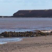 Un amas d'algues sur la plage.