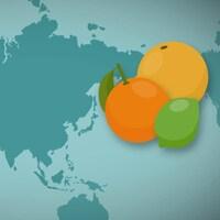 Image infographique d'une carte mondiale avec le dessin d'orange, pamplemousse et lime.