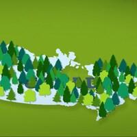 Carte infographique du Canada avec des conifères sur tout le territoire.