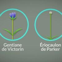 Images infographique de plantes menacées.