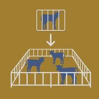 Image infographique comparant une cage à un enclos collectif.