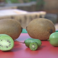 Trois sortes de minikiwis comparées au kiwis réguliers.