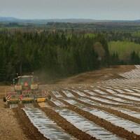 Un tracteur installe des flims de plastique sur les rangs dans un champs.