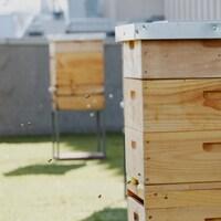 Des ruches sur le toit d'un édifice en ville et quelques abeilles qui y rentrent.