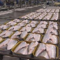 Une table remplie de conserves de sardines.