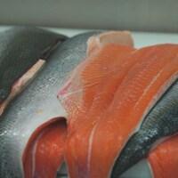 Des filets de saumons frais sur une table de travail dans une usine de transformation.