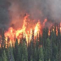 Des arbres en feu.