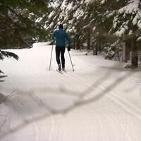 Un homme fait du ski de fond sur un sentier enneigé entouré de conifères.