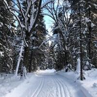 Deux pistes de ski de fond classique, en forêt.