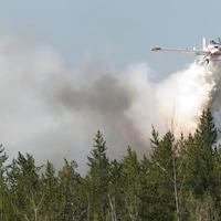 Un avion-citerne répand une cargaison d'eau sur une forêt de conifères.