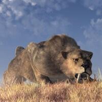 Illustration montrant un tigre à dents de sabre à la chasse.