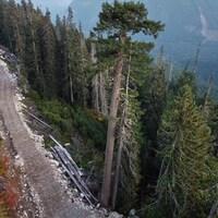 Une route de bois à flan de montagne dans une forêt.