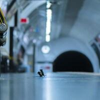 Deux souris se battent sur un quai de métro.