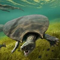 Des tortues nagent, entourée de poissons et d'un grand reptile ressemblant à un crocodile.