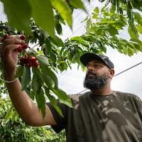 Sukhdeep Brar, le propriétaire de Brarstar Orchards.