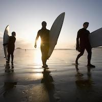 Silhouettes de trois surfeurs sortant de l'eau sur la plage Chesterman, à Tofino.
