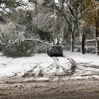 Un arbre tombé au sol bloque une route, sous la neige.