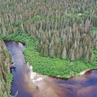Une vue aérienne d'une forêt et d'une rivière.