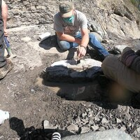 Des paléontologues examinent le fossile de la tortue incrusté dans une roche au bord de la rivière Puntledge