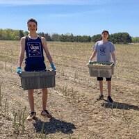 Les trois adolescents debout dans un champ, avec un bac rempli d'asperges.