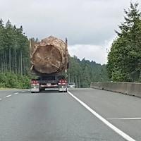 Un immense tronc d'arbre sur une remorque.