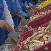 Des travailleurs d'une usine de transformation de fruits de mer.
