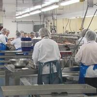 Plusieurs travailleurs coiffés de bonnets dans une usine de transformation des produits de la mer.