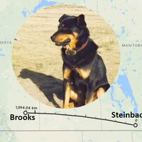 Une photo en encadré du chien Vader est superposé sur une carte avec le tracé du trajet parcouru par le chien