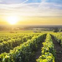Un lever de soleil sur un vignoble français.