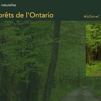 Rapport provincial sur l'état des forêts