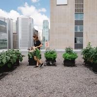 Une femme fait la récolte de produits agricoles poussés dans de grands paniers sur le toît d'un édifice en milieu urbain.