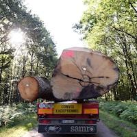 Deux immenses troncs d'arbre sont transportés par un camion qui porte l'inscription « Convoi exceptionnel ».