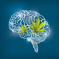 Illustration de deux feuilles de cannabis et d'un cerveau.