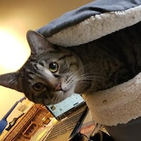 Un chat sort la tête d'un panier rembourré.
