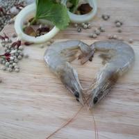 Les crevettes d'ECO Shrimp Garden