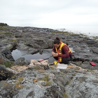 Excursion géologique nord-côtière faite dans le cadre d'un cours de Technologie minérale au cégep de Sept-Îles.