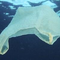 Un des milliards de sacs de plastique à la dérive dans les océans.