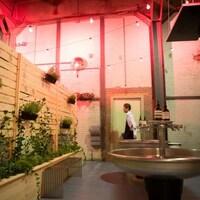 Des plantes vertes sont accrochées sur une palissades en bois d'un côté, alors que des grands lavabos d'aciers sont disposés au centre.