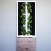 Un jardin hydroponique d'intérieur avec des légumes.