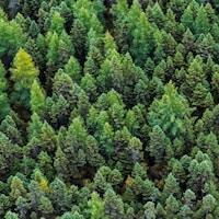 Une photo aérienne prise de la forêt boréale canadienne.