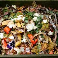 Des aliments sont disposés dans un bac à compost.