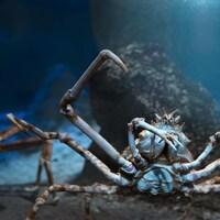 Des crabes marchent sur le fond marin.