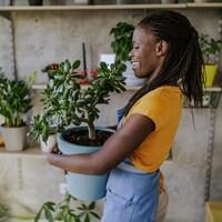 Une femme transporte une plante dans ses bras.