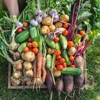 Une brouette est remplie de légumes fraîchement cultivés.