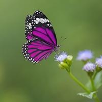 Un papillon se pose sur une fleur.