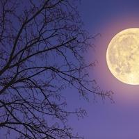 La pleine lune brille dans le ciel et illumine un arbre.