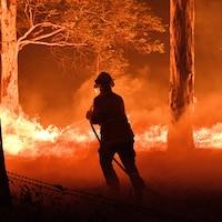 Un pompier arrose des arbres dans l'État de New South Wales, en Australie.