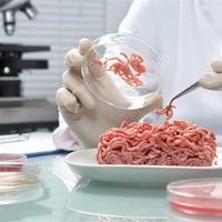 Un scientifique manipule de la viande hachée fabriquée en laboratoire.
