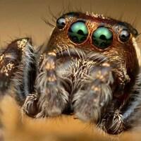Photo en très gros plan d'une araignée provenant du compte Instagram de  Thomas Shahan.