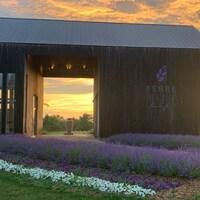 Des fleurs de lavande à l'entrée de la ferme Terre Bleu à Milton